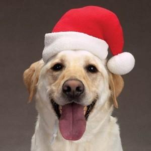 Noël chien